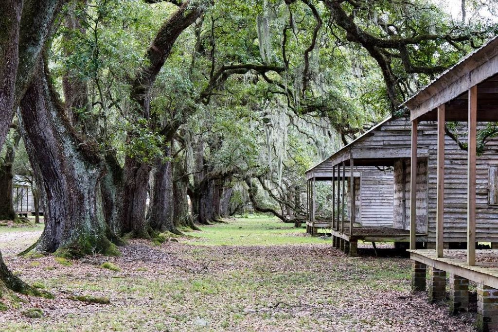2 slave cabins on the right with a row of old oak trees to the left