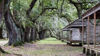 2 slave cabins on the right with a row of old oak trees to the left-New Orleans Plantations