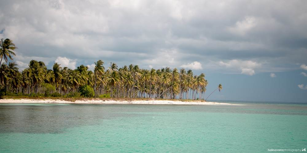 turquoise blue water with a beach covered in palm trees