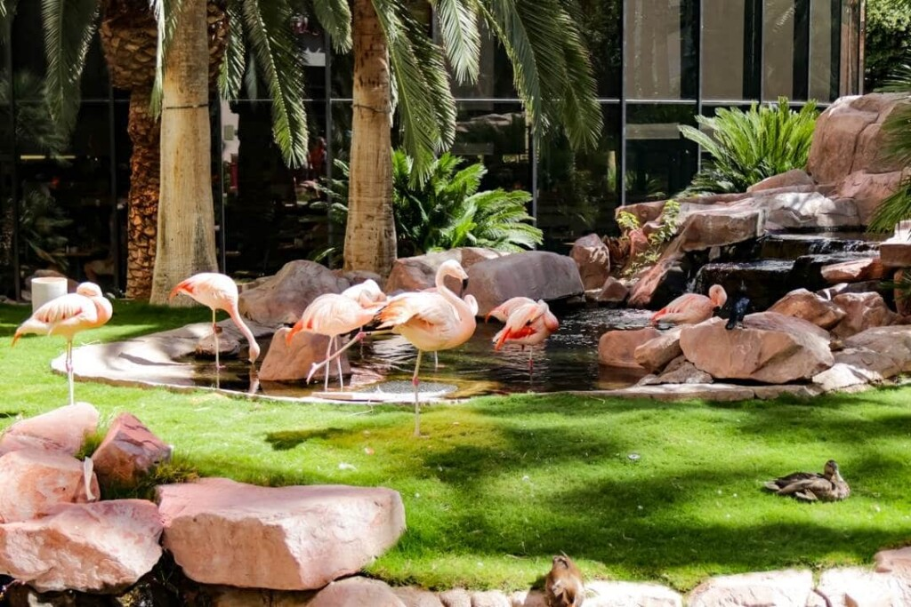 flamingos standing in a small pond