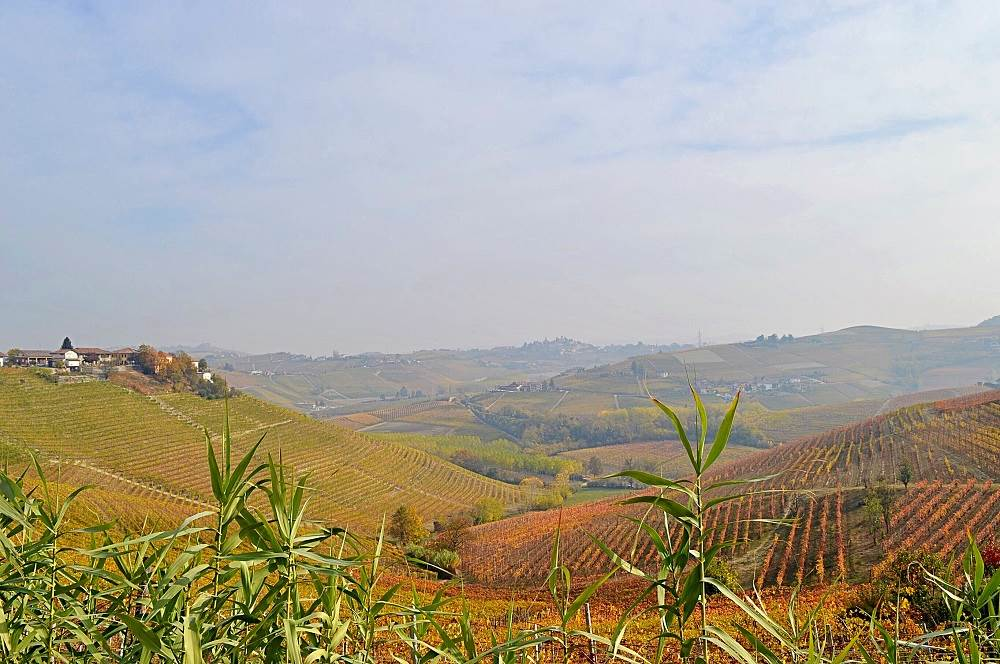 Barbaresco countryside