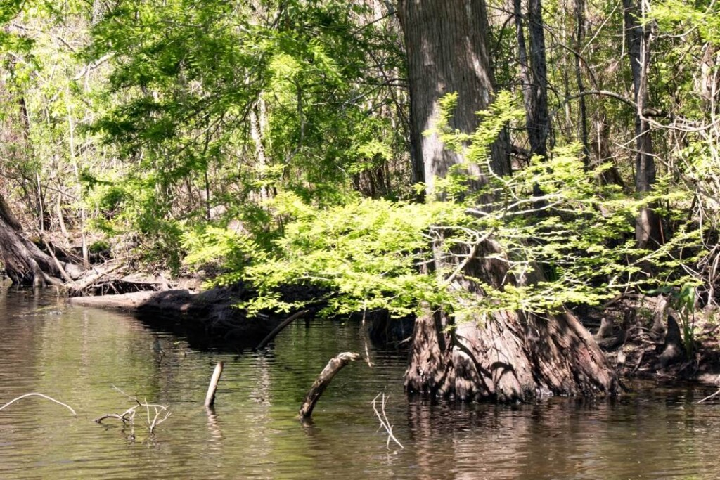 swamp tours-day trip from New Orleans