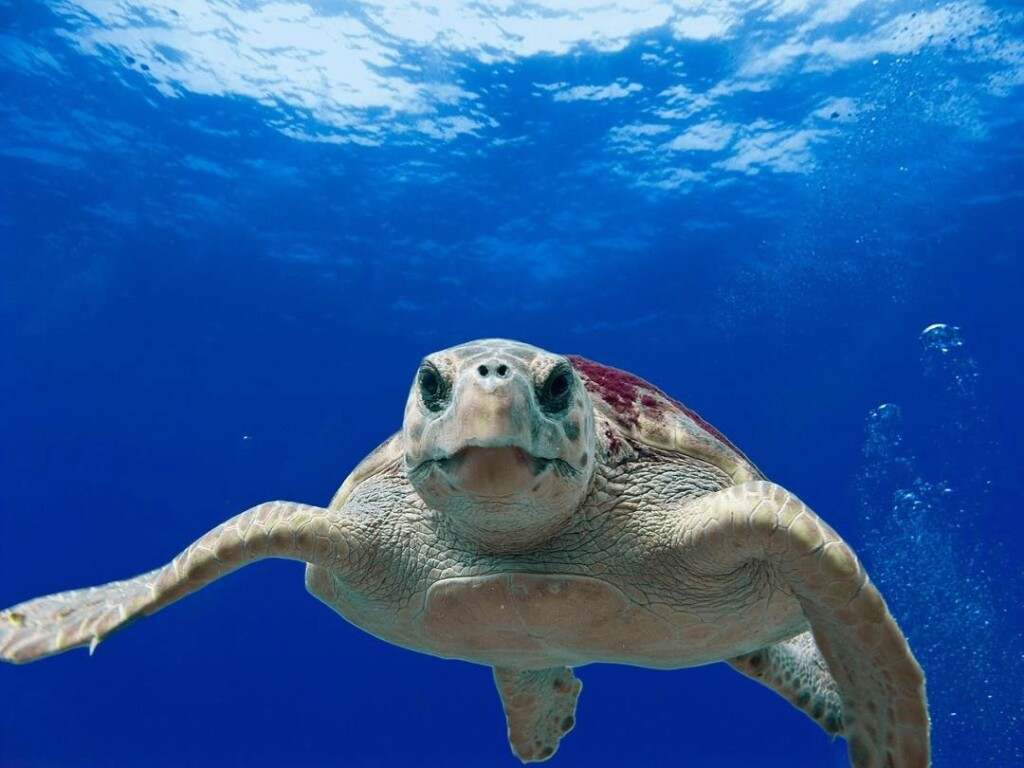 swimming with the sea turtles is one of the fun things to do in Riviera Maya