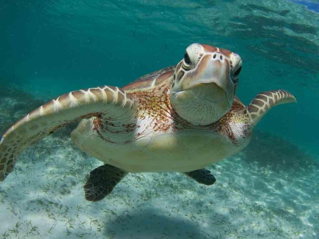 sea turtle-