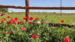 wildseed farms is one of the things to do in Fredericksburg, TX