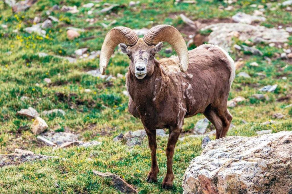 Photographing wildlife is on of the fun things to do in Estes Park CO