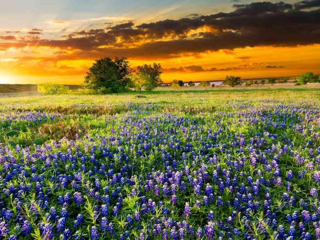texas travel