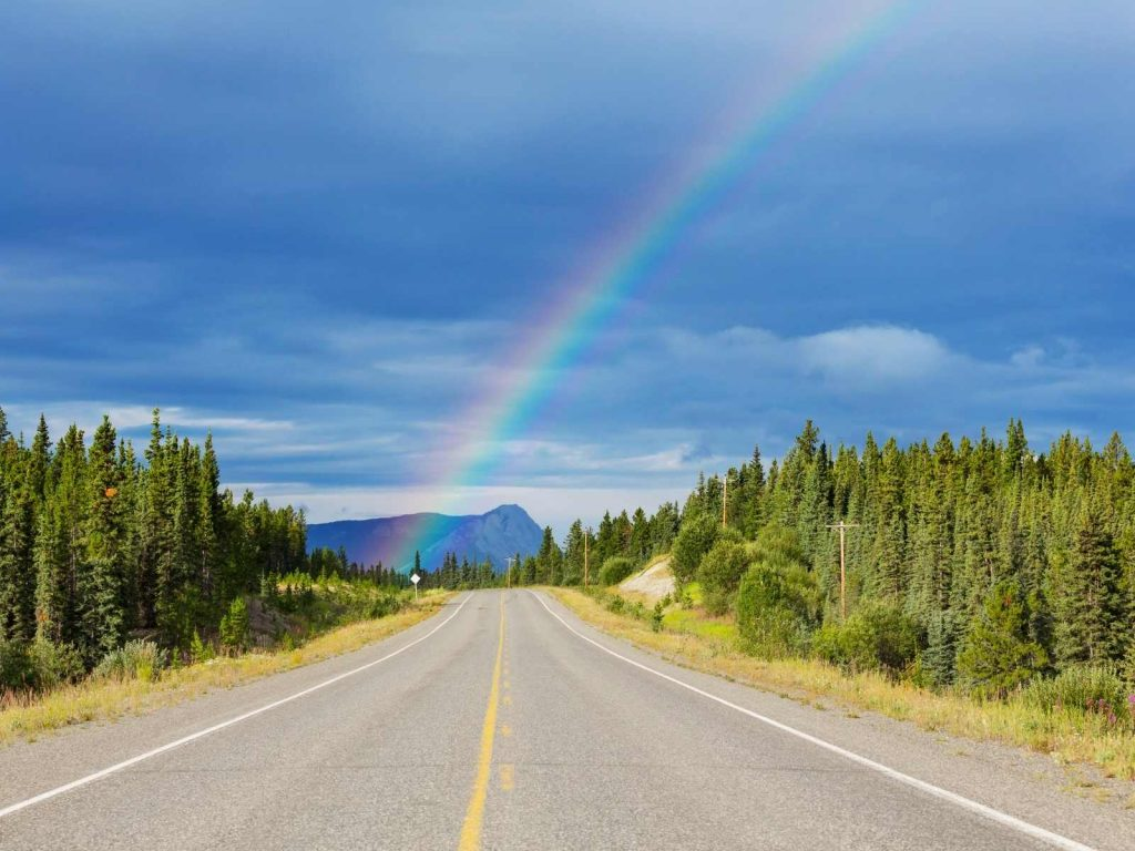 road lined with pine trees and a rainbow in the distance